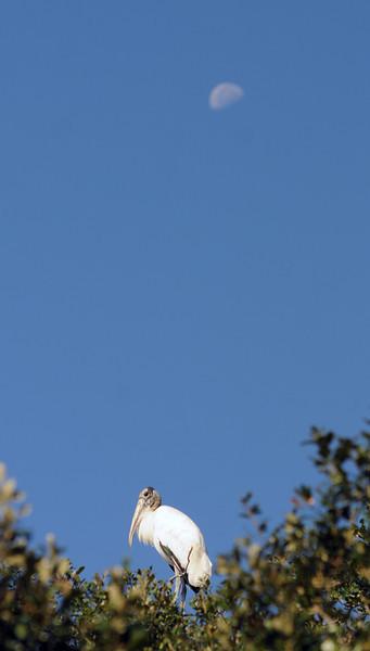 SCOPe_Huntington Beach State Park OCT 2012_23.jpg