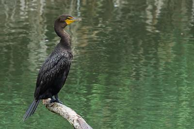 Baylands Nature Reserve 082218