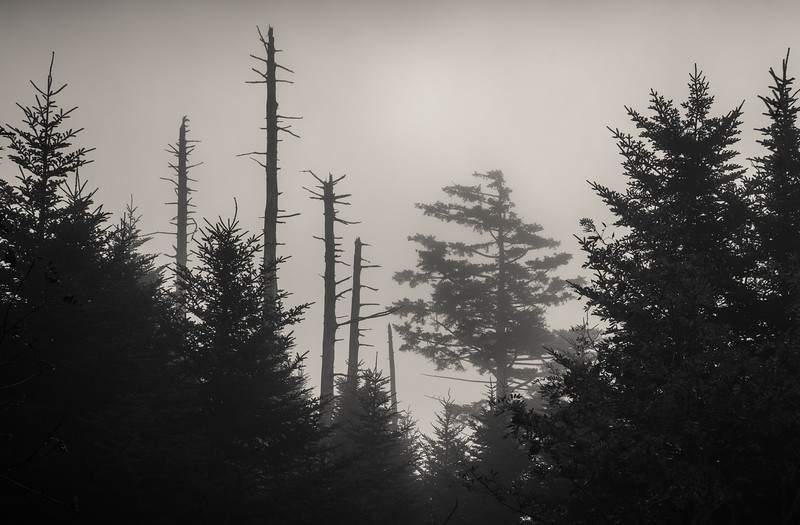 20161013_great_smoky_mountains_0692.jpg
