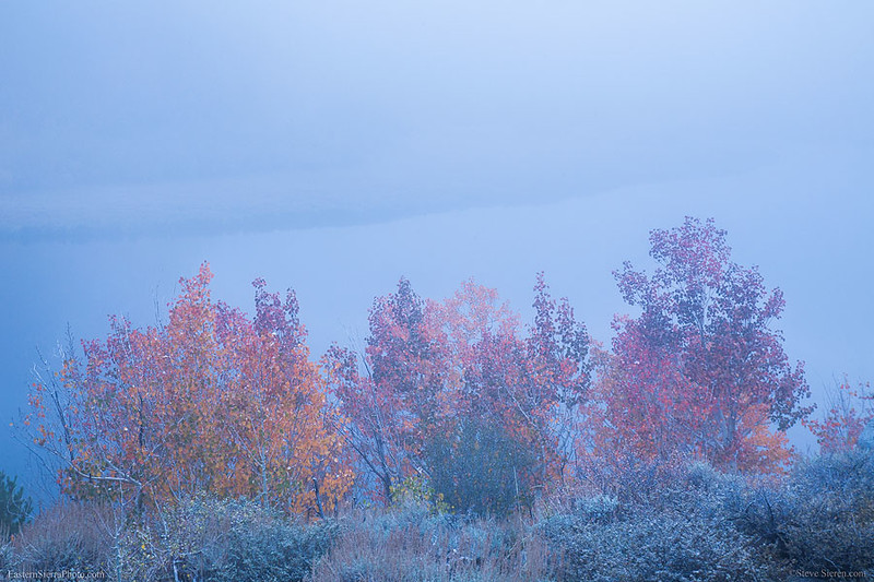 Foggy Fall Color North Lake Eastern Sierra.jpg