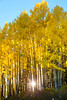 Sunburst through aspens in the Northern Gore Range, CO