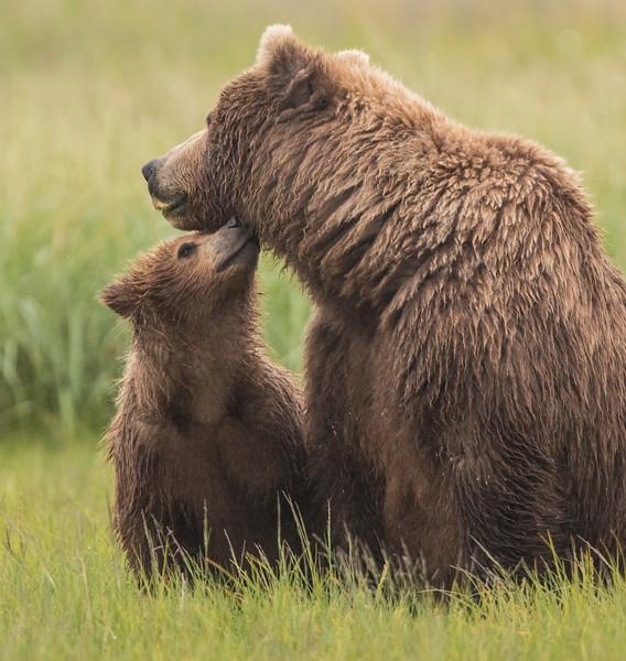 alaska-bears-24.jpg