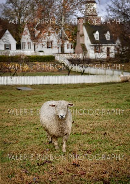 Valerie Durbon Photography W1.jpg