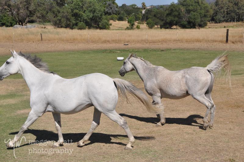 EB&Horses-090.jpg