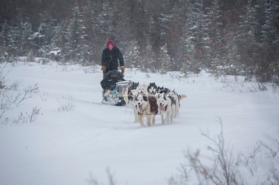 Dog sledding, Churchill