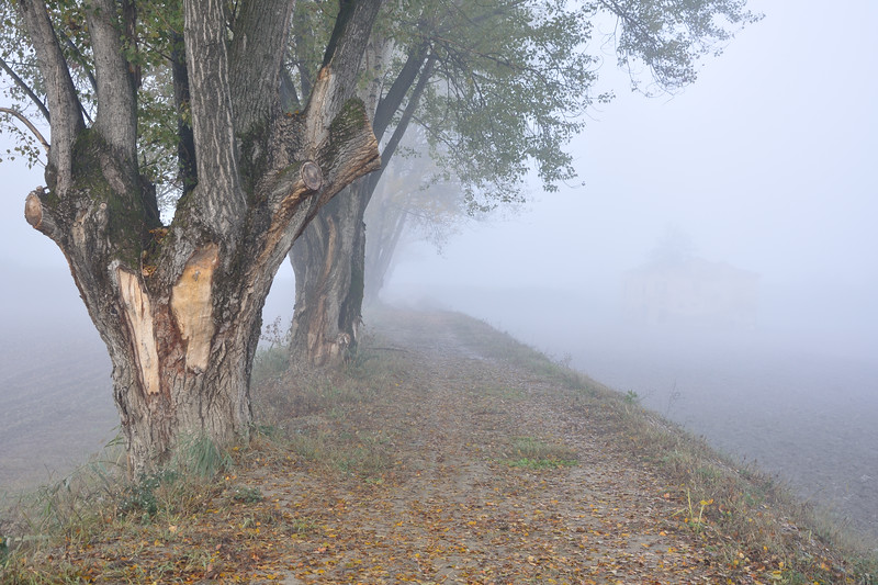 Trees on a Levee - Sozzigalli, Soliera, Modena, Italy - November 18, 2011