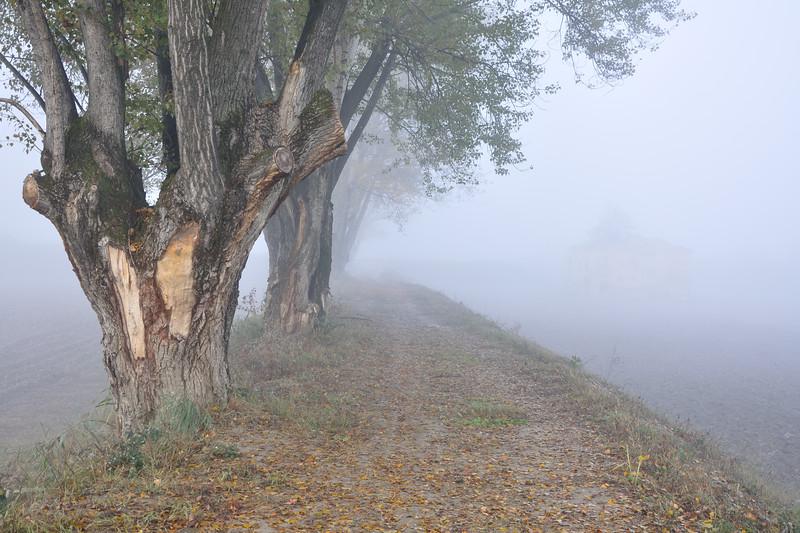 Trees on a Levee - Sozzigalli, Soliera, Modena, Italy - November 18, 2011