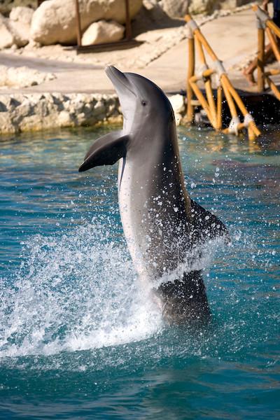 Dolphinaris Cozumel 3.jpg
