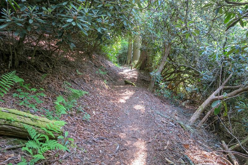 Mountains-to-Sea Trail -- 4,330'