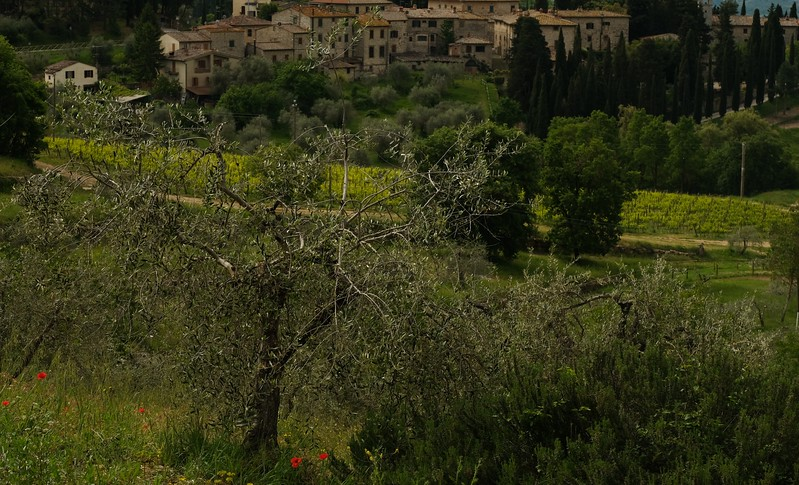 Village, poppies and olive trees