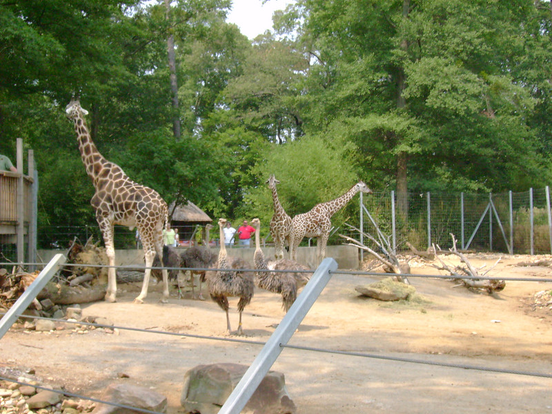 Animals at the Savanah exhibit.