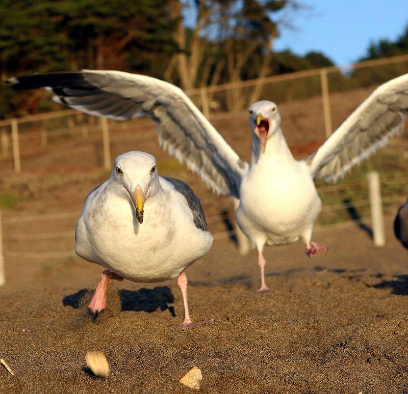 gulls_feeding_02.jpg