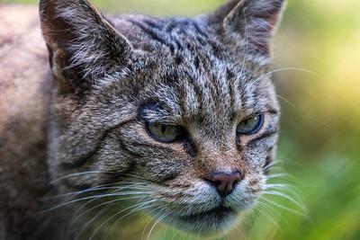 Natur und Tierpark Goldau