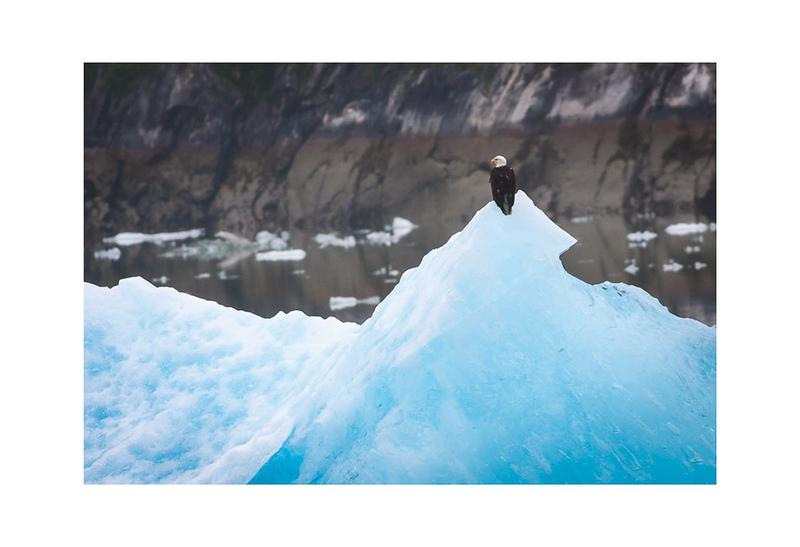 Bird on Ice.jpg