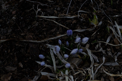 Signs of Hope...Vernal Equinox 3/21/11