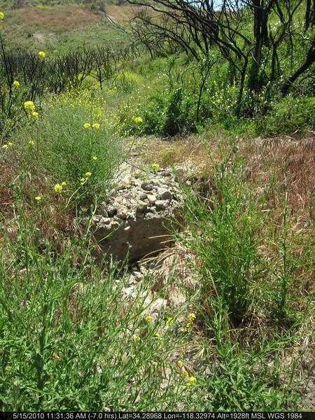 20100515047-Doc Larson Trail Recon.JPG