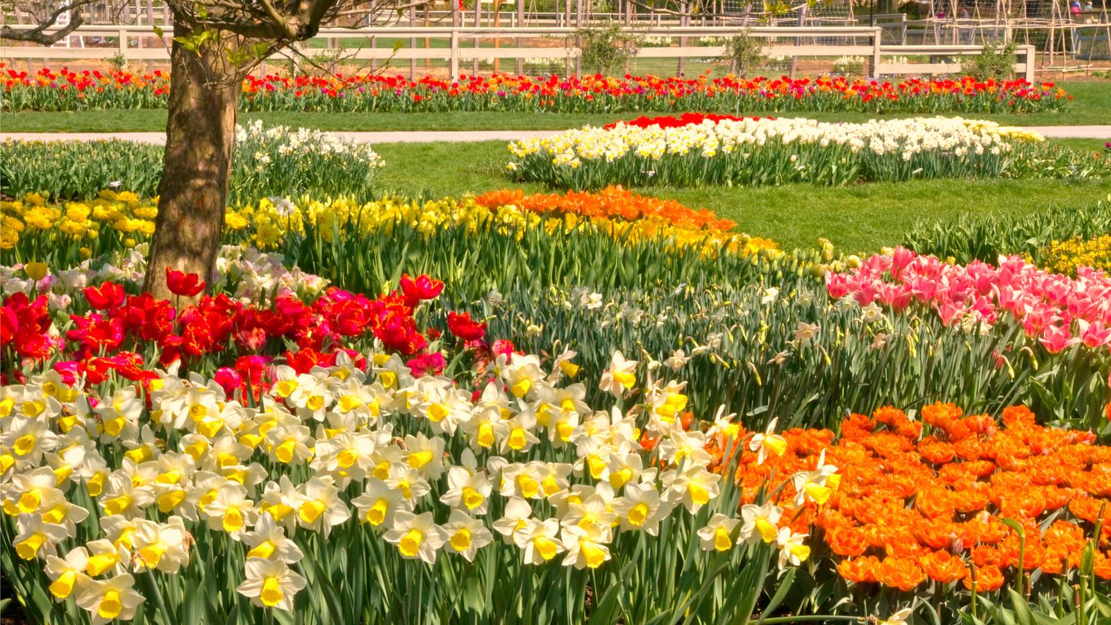 长木公园,赏花的心情