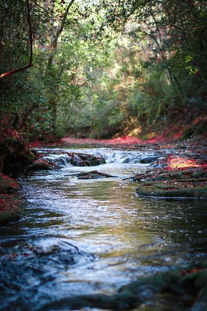 Hiking The Florida Trail Segment 37