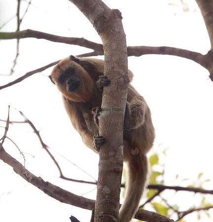 Primates-s