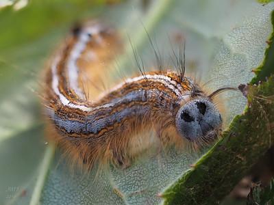 2016 Bugs
