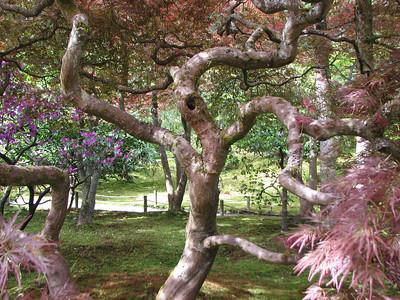 2010/04 - Japanese Gardens at Seattle Arboretum