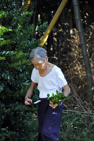Katsuko's Jinja - 1 Oct 2012 (13)