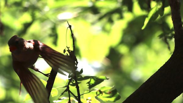 1 September 2021 Falaise Birds
