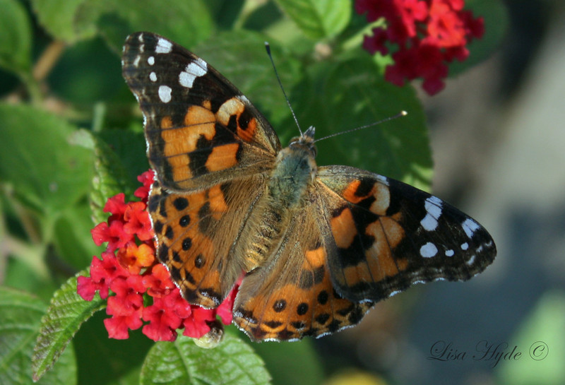 IMG_2594 PS BUTTERFLY signed.jpg