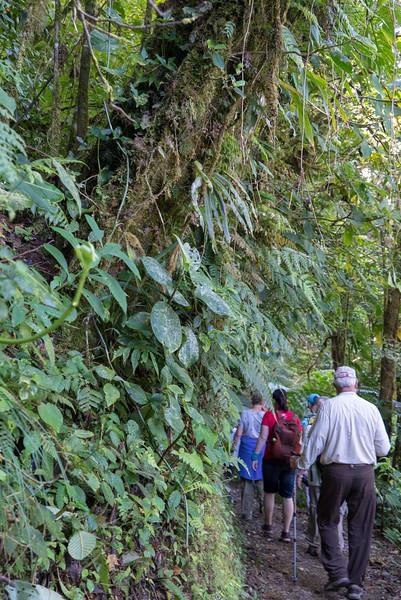Costa Rica 2015-4163.jpg