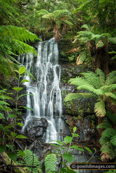 Cyathea falls, Tarra River, Tarra Bulga NP