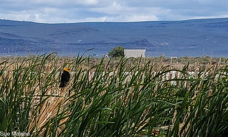 05-19-2021 Summer Lake Wildlife Refuge-24.jpg