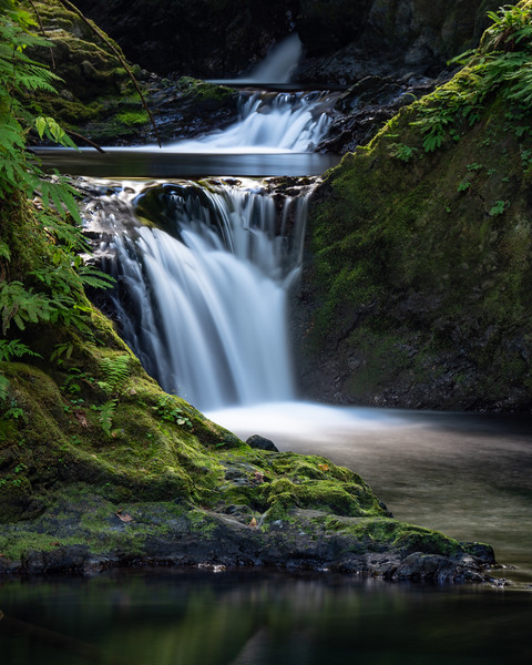Willaby Creek Falls is visible from a trail in the Quinault Rain Forest, Washington. Olympus OM-D E-M1 Mark II, 12-100mm, ISO 200, f/8, 5 sec., Bryan Hansel Waterfall Filter.