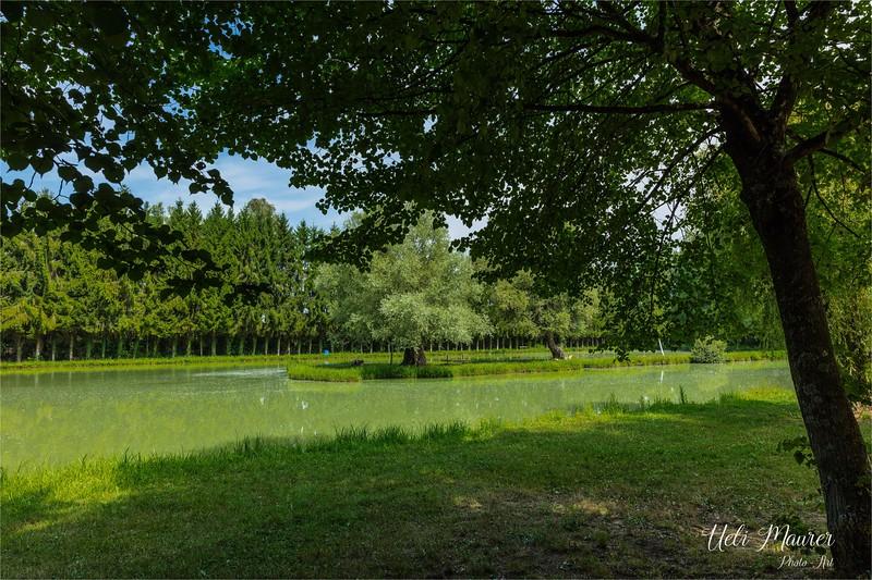 2017-07-19 Petite Camargue Alsacienne - 0U5A2999.jpg