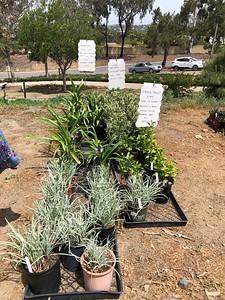 20210501 VGC PLANT and Garden Art Sale
