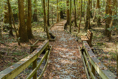 Congaree National Park (South Carolina)