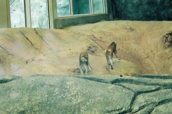 Ashborough Zoo