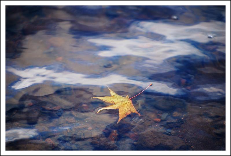 Floating face down on Lake Ashi