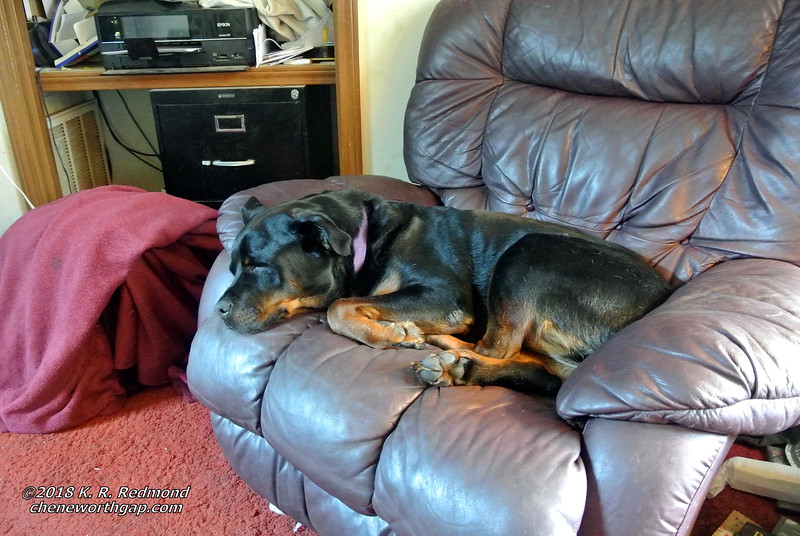 Roxie Anne on her Recliner