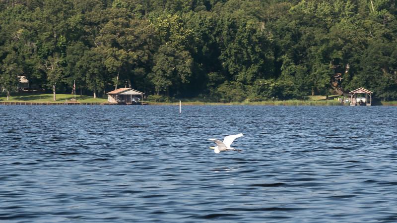 egret over blue lake
