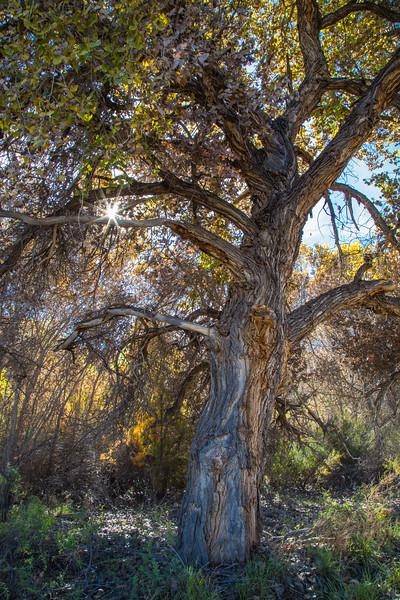 Bosque del Apache  11-7-2016a.jpg