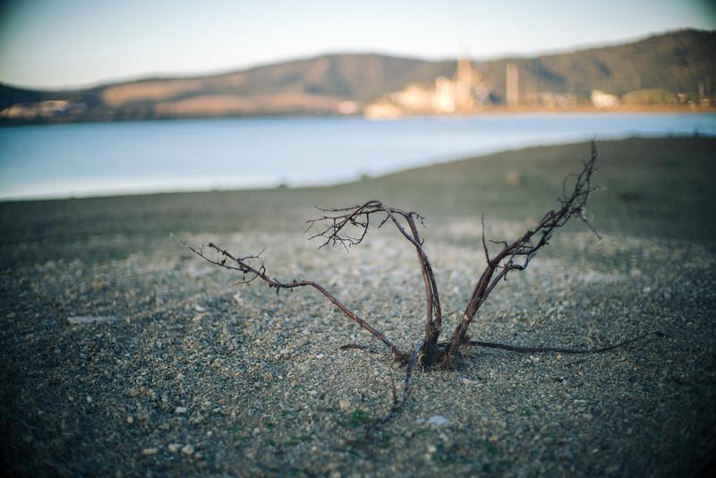 A dead bush emerges at the bottom of a half-empty reservoir, Espiel, Córdoba, Spain.
