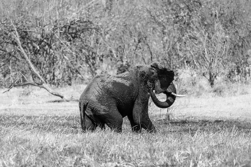 Botswana_June_2017 (2883 of 6179).jpg