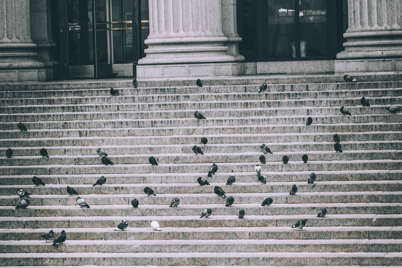 Birds in steps.jpg