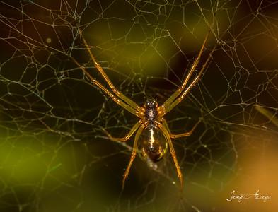 2019 Macro: Spider