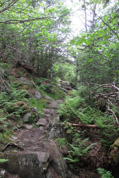 Old Mitchell Trail (6,200')