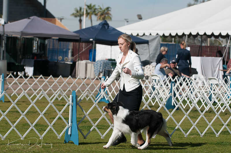 20170205_Australian Shepherds_Lost Dutchman Kennel Club-125.jpg