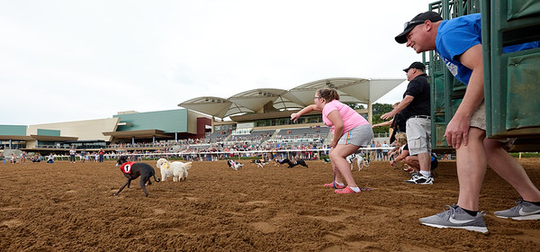 2019 Belterra Park Wiener Dog Races