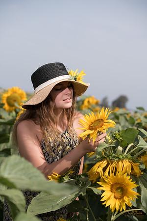 2018-05-20 Sunflowers