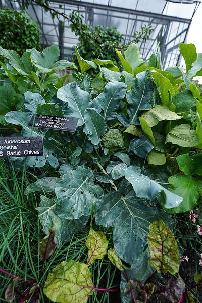 a 8 27 Arboretum-12.JPG
