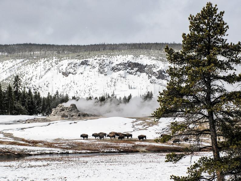 Yellowstone_118.jpg